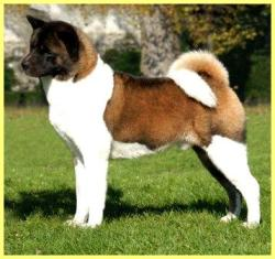 sire: BIS, ICh. Torazo's Pearl Ike Warrior (Import USA)